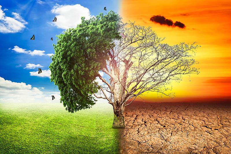 Crecimiento personal: metáfora de los dos árboles